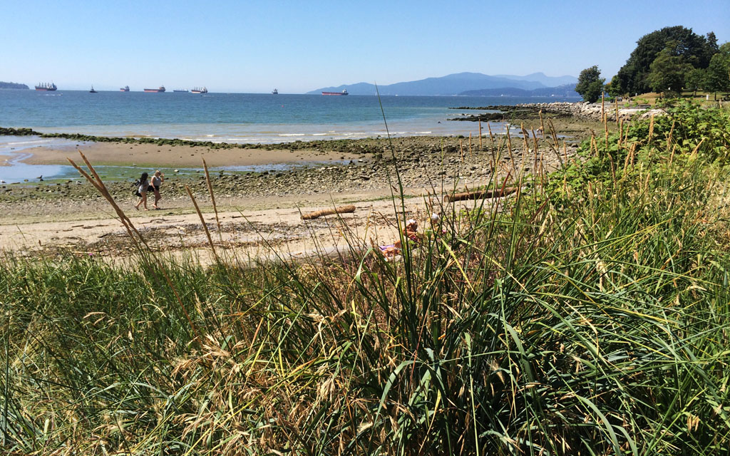 English-Bay-Beach-Long-Grass