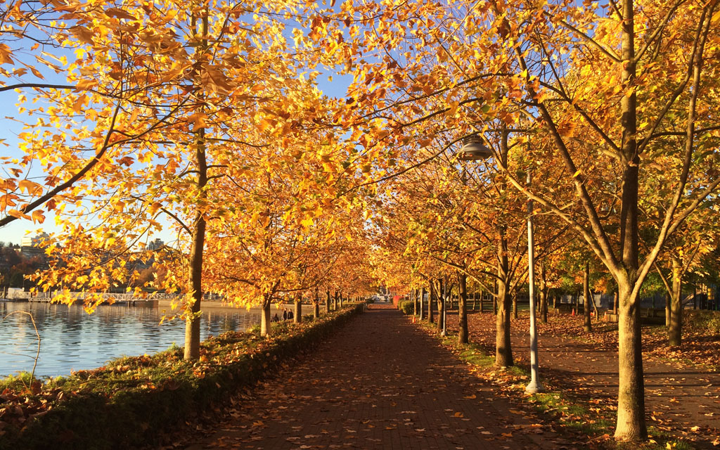 Fall-Foliage-Vancouver
